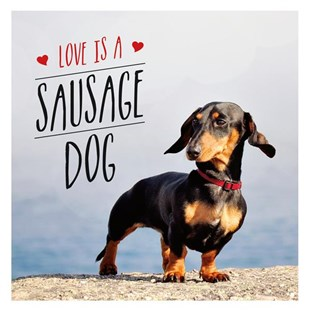 Love Is A Sausage Dog Book